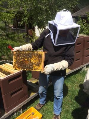 Wild- und Honigbienen