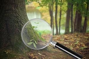 Auf Spurensuche im Wald - © Naturpark Thal