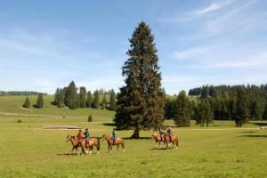 Itinéraires équestres - © Jura Tourisme