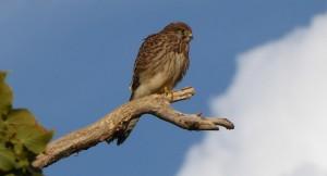 Faszination Vogelbeobachtung