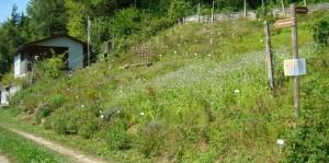 Majas Wildkräutergarten