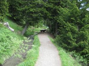 Soundwalk Vallon de la Tièche - © Naturpark Pfyn-Finges