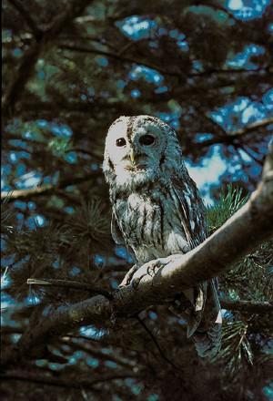 Nacht der Vögel - © SVS Birdlife