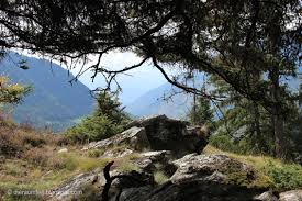 Den Zauberwald erleben