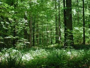 Gantrisch - Waldtag