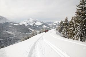 La faune en hiver