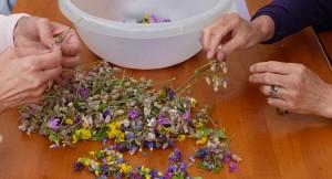 Kräuterwanderung mit Apéro - © Herbs for you
