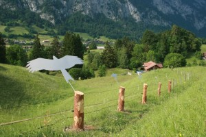 Bird theme trail: from the red kite to the dipper