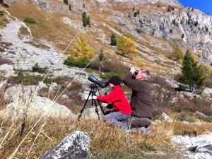 Birdwatching Filisur