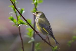 Vogelkundlicher Spaziergang