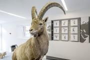 Ausstellung Capricorn - © www.demateo.com