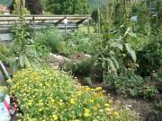 Heilpflanzenwerkstatt - © Obst- und Gartenbauverein Balsthal