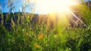 Das Thal, unser Kräutergarten - © Naturpark Thal